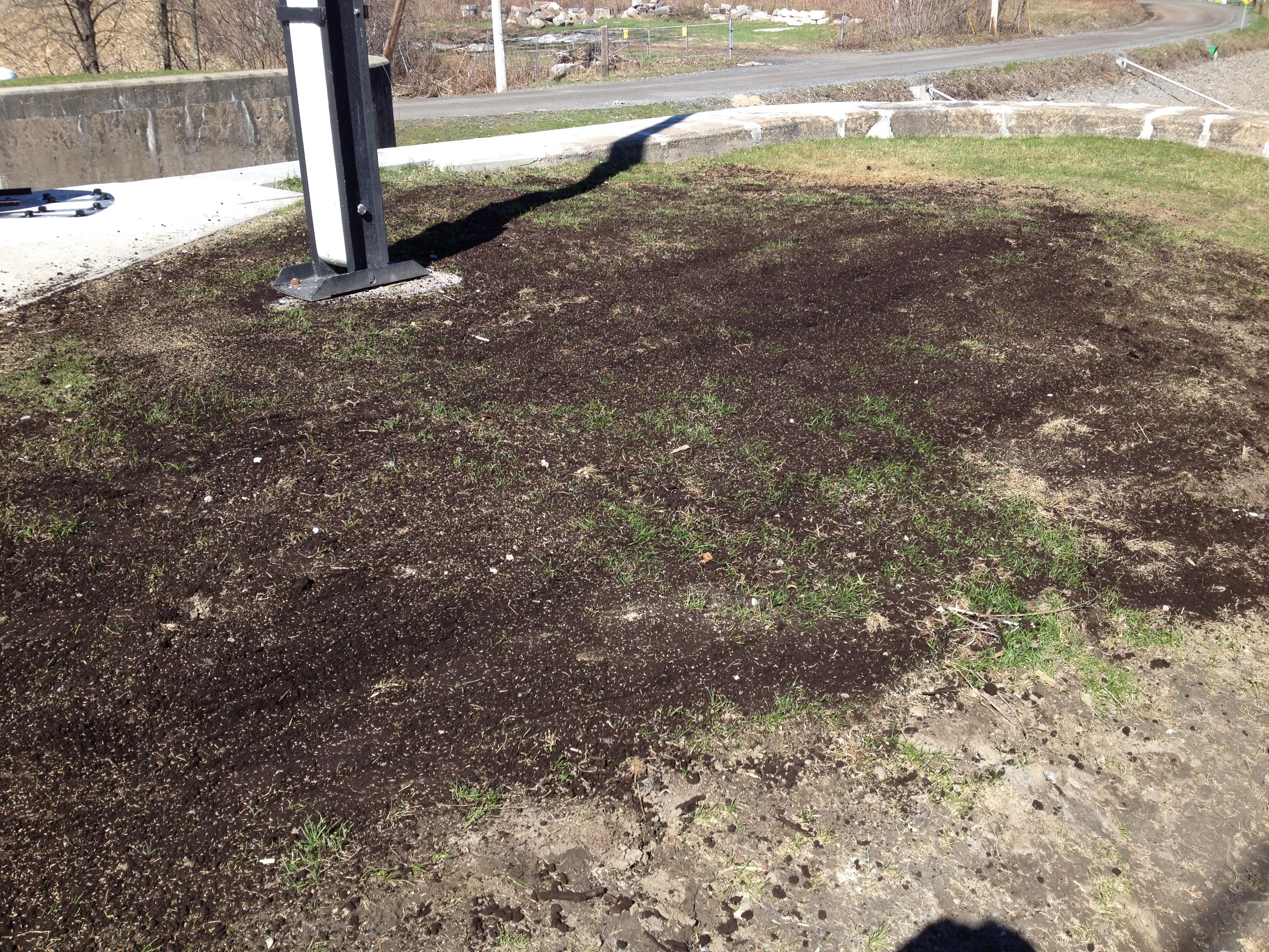 R fection et r ensemencement 1 sb pelouse for Refection pelouse prix